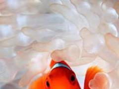 Marine Animals wallpaper 2.0 Screenshot