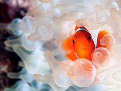 Marine Aquarium Gallery 3D 1.0 Screenshot