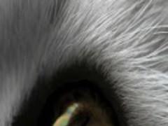 Mystical Swirling Cat Eye LWP 1.2.02 Screenshot
