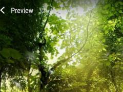 Nature Live WallpaperHD 2.0 Screenshot
