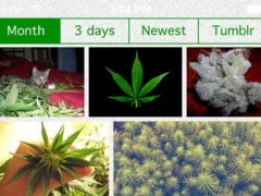 News For Marijuana Free HD 1.0 Screenshot