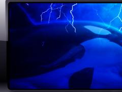 Orca Wallpaper 1.0 Screenshot