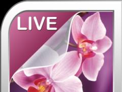 Orchid Live Wallpaper 5.0 Screenshot