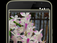 Orchids in Indonesia 3.1 Screenshot