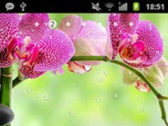 Orchids In Water II Pro 1.1 Screenshot