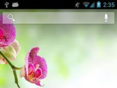 Orchids in Water II 2.0 Screenshot