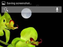 Orchids In Water Pro HD 1.3 Screenshot