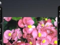 Ornamental Plants Guide 1.0 Screenshot