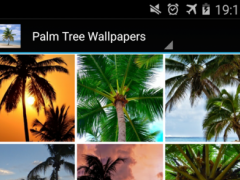 Palm Tree Wallpapers HD: Free 1.0 Screenshot