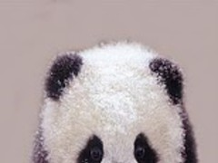Panda Tender On Snow 11.2 Screenshot