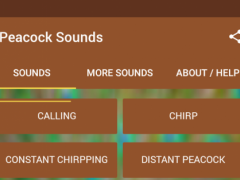 Peacock Sounds 1 7 3 Free Download