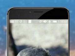 Penguins HD Video Wallpaper 1.0 Screenshot