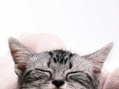 Pet Cat wallpaper 2.0 Screenshot