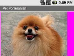 Pet Pomeranian 1.0 Screenshot