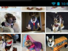 Pets Party 1.0 Screenshot