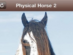 Physical Horse 2 - Equestrian Horsemanship Reference App 2 Screenshot