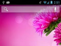 Pink Gerbera 1.4 Screenshot