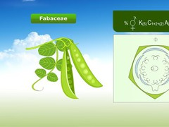 Plant Families 1.2.1 Screenshot