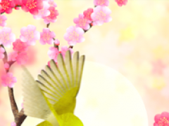 Plum-Blossom and White-Eye 1.0.1 Screenshot