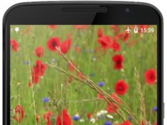 Poppy Flower Live Wallpaper 2.0 Screenshot