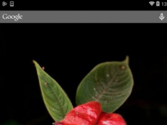 Psychotria Elata Wallpaper 1.1.1 Screenshot
