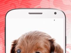 Puppies Live Wallpaper HD 1.7 Screenshot