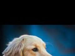 Puppy Dog Live Wallpaper 1.2.9 Screenshot