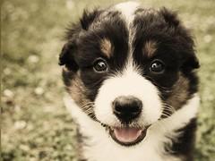 PuppyWall FREE -LiveWallpaper 1.0.7 Screenshot