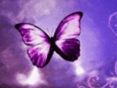 Purple Butterfly Reflected In 3.5 Screenshot
