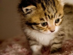 Puzzle - kittens 1.18 Screenshot
