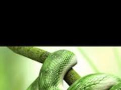 Python Snake Live Wallpaper 1.2.9 Free