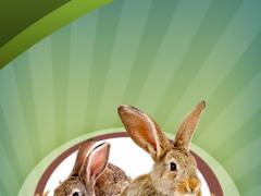 Rabbit Forum  Screenshot