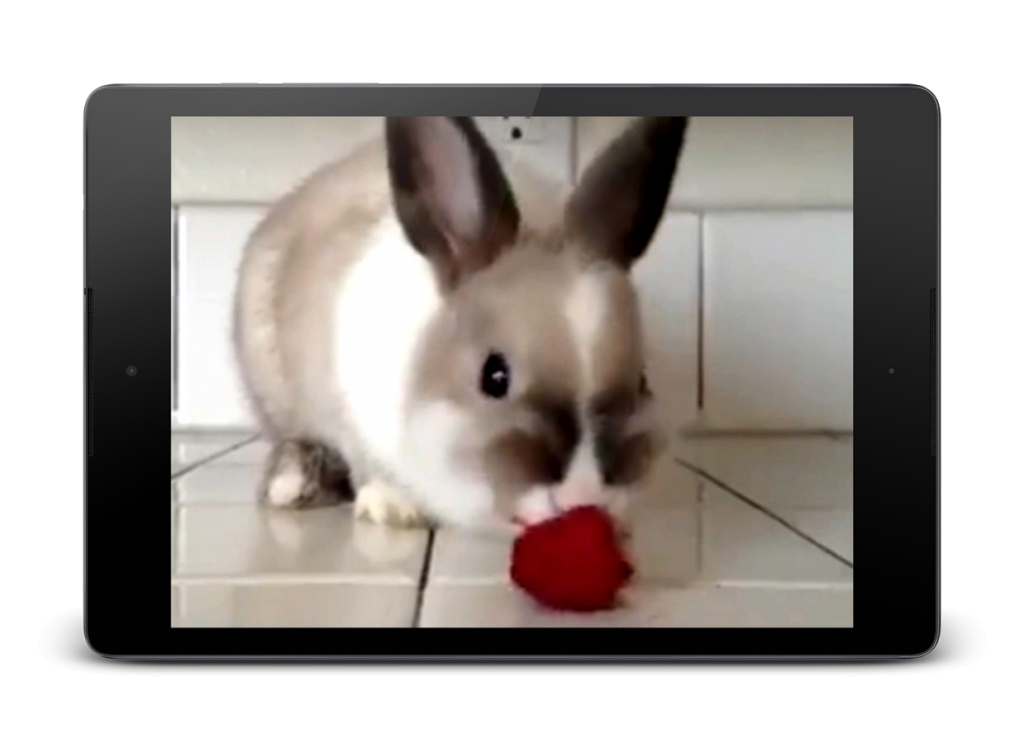 Rabbit Hd Live Wallpaper 10 Free Download