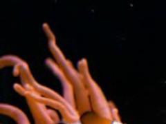 Real clownfish in Aquarium 2.8 Screenshot