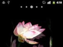 Red Flower 2.1 Screenshot
