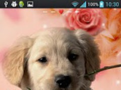 Red Rose Dog Theme GO Launcher 1.0 Screenshot