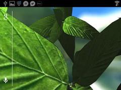 Refreshing Leaves 3D Wallpaper 1.2 Screenshot