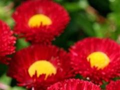 Ripples Flower Live Wallpaper 1.2 Screenshot