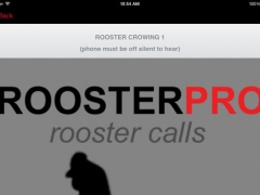 Rooster Sounds and Rooster Crowing 1.0 Screenshot