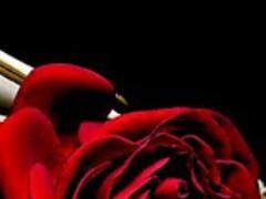 Rose of Love 1.1 Screenshot