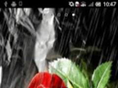 Rose under the rain 1.6 Screenshot
