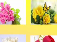 Roses Wallpaper 1.0 Screenshot