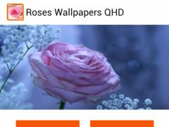 Roses Wallpapers QHD 1.3 Screenshot