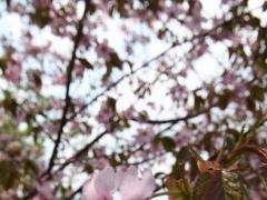 札幌 旭ヶ丘 公園 (Sapporo Asahigaoka) 1.0.0 Screenshot