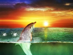 Sea Dolphin Live Wallpaper 3.0 Screenshot