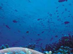 Seabed Live Wallpaper 4.0 Screenshot