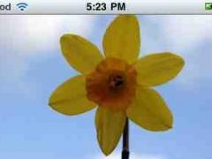 Severe Allergy Coach 1.1 Screenshot