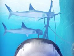 Shark aquarium 1.2 Screenshot