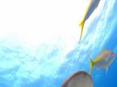 Sharks HD 1.0 Screenshot