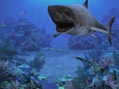 Sharks, Terrors of the Deep 2.0 Screenshot